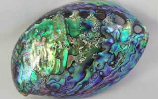 Камень перламутр – мать жемчуга – история, полезные свойства и описание камня