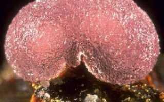 Штренгит – история, полезные свойства и описание камня
